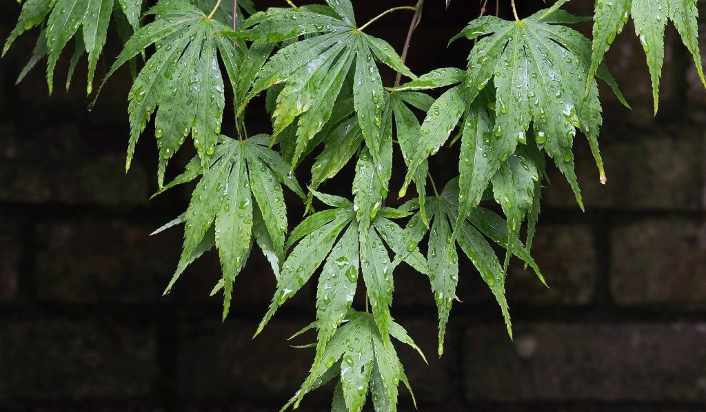 Gardening in wet weather   Plants for heavy rain