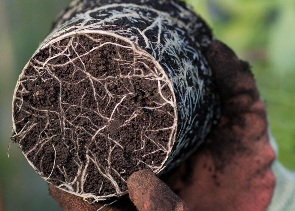 What Is Plant Dormancy?