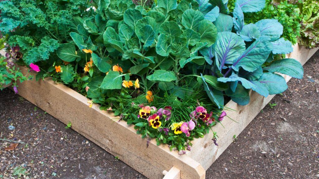 National Children's Gardening Week 2021 - Flower and Vegetable Bed
