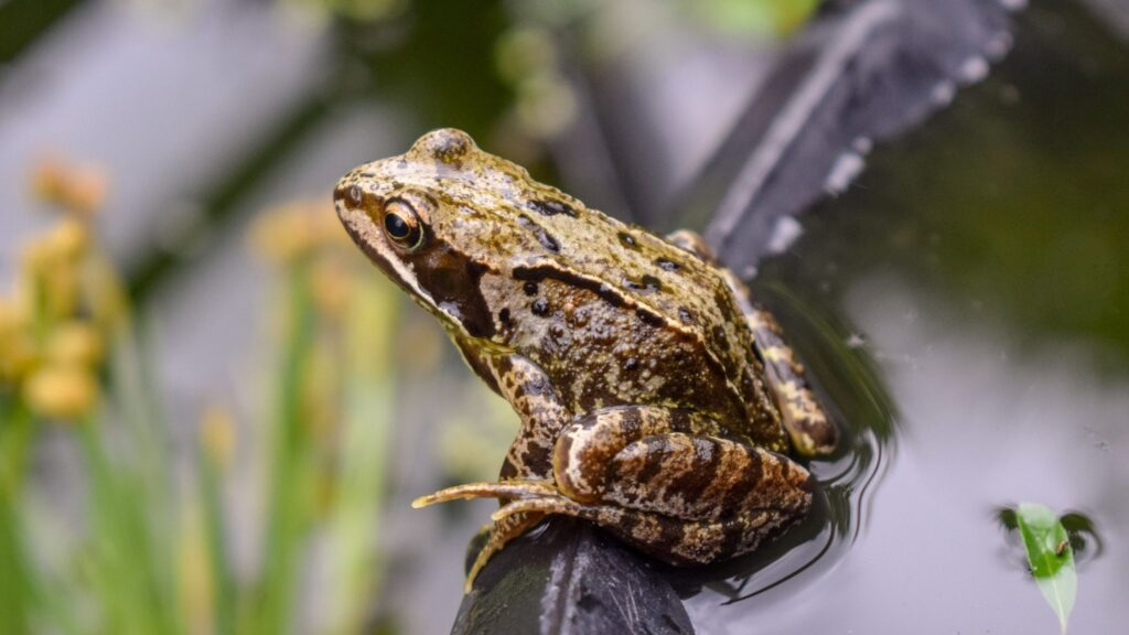 National Children's Gardening Week 2021 - Container Wildlife Pond to Attract Frogs