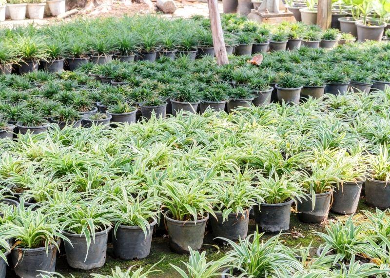 Plant Pot Size Guide