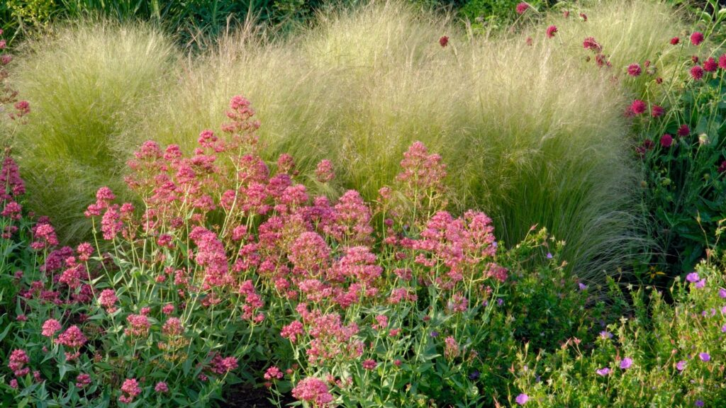 Prairie Plants - Prairie Style Garden