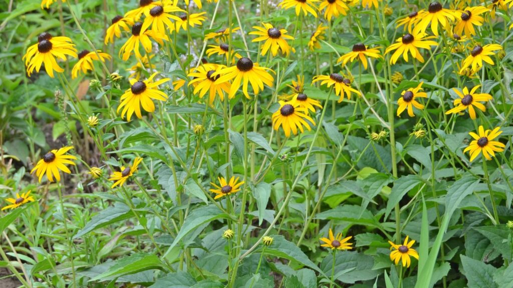 Summer Plant Watering Tips for a Luscious Green Garden