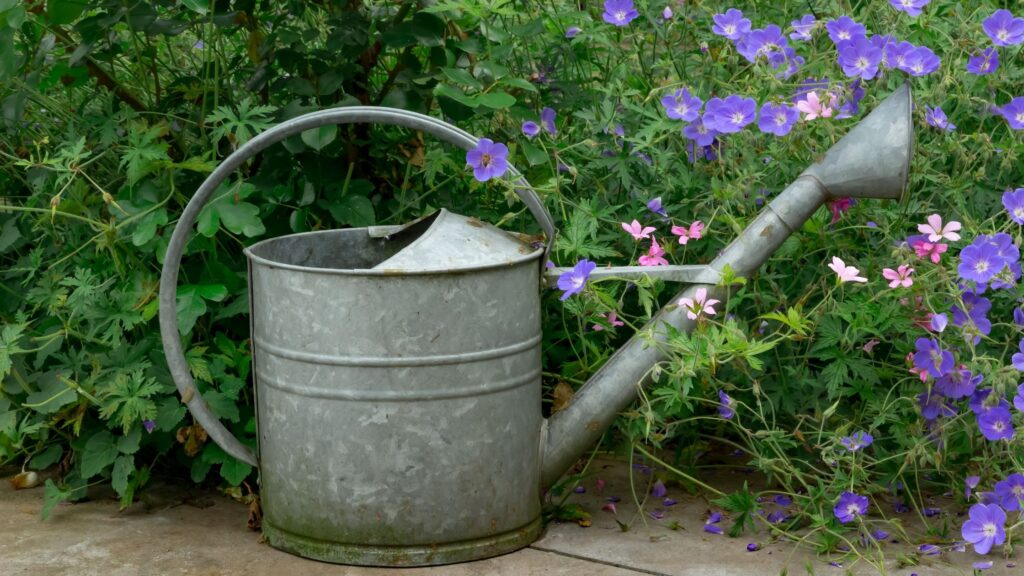 Watering Plant Guide - Tips and Tricks - Watering Can