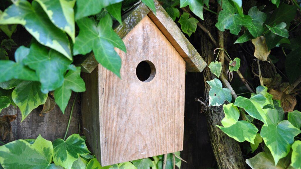 Autumn Gardening Checklist - Wild Life Tips For Autumn - Bird House